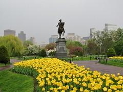 George Washington among tulips