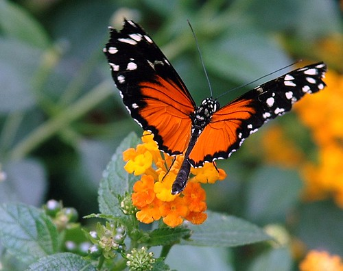 a photo of a butterfly taken at the boston museum of science