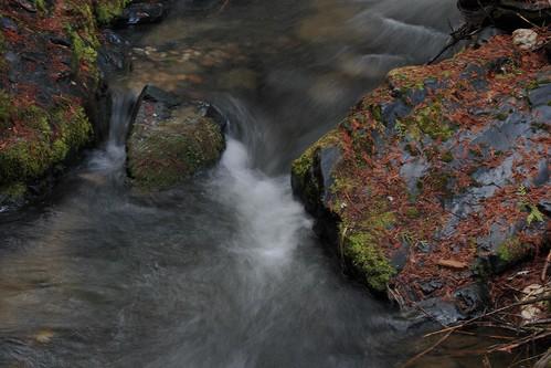 Nancy Creek