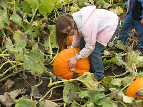 Dot in the Pumpkin Patch