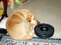 Chief and Roomba