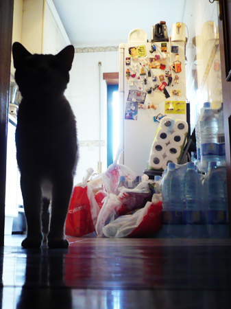 #118 - Groceries and curious cat