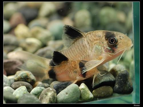 疑問 - 超新手養魚請教 - 史萊姆論壇