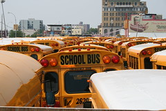 A lot of school buses