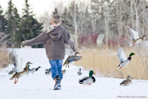DuckScatter2