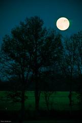 Moon-3707.jpg