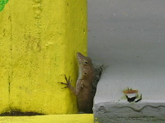 A lizard climbing on a yellow pole!