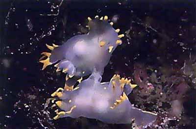 2499630756 8f37db17c3 o Criaturas inacreditáveis do fundo do mar