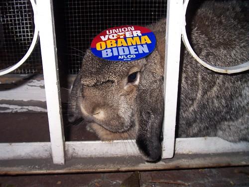 bunny union voters (5)