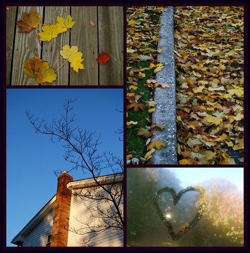 Fall Photo Series Collage Week 6