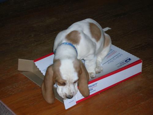 Baby Sissy 12-2007
