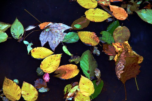 Fall on Water