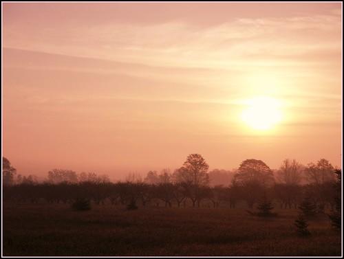 Apple Orchard Sunrise
