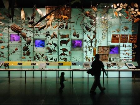 Biodiversity - Photo : Dom Dada