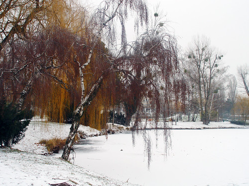 frozen lake, snow and curtain trees