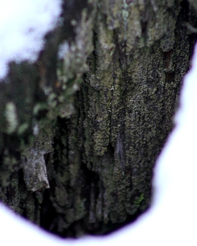 in a stump