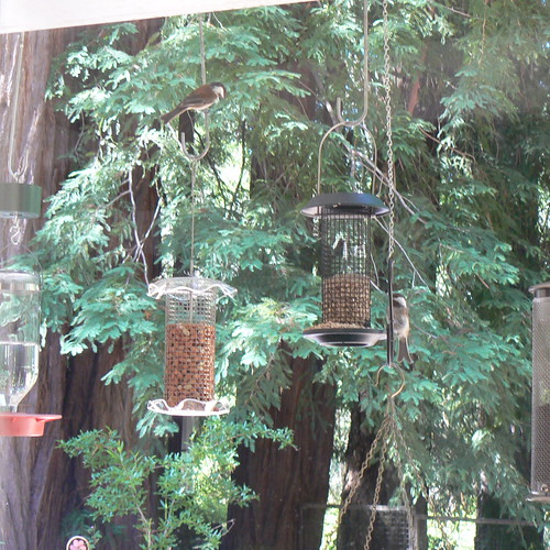 Clean & Refilled feeders