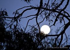 20110518 Full Moon through branches