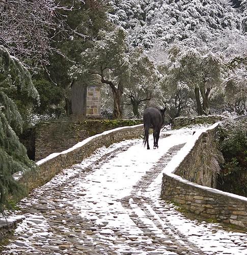 Mule in snow