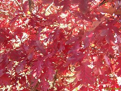 Pretty Fall Leaves