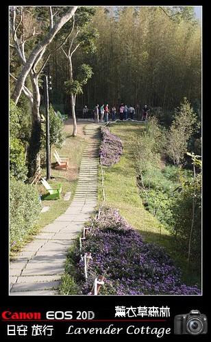 LavenderCottage_0054
