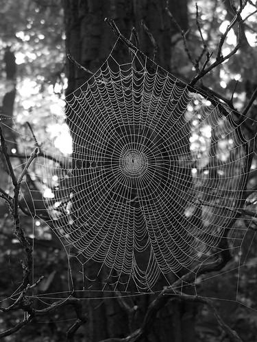 spider woods 3