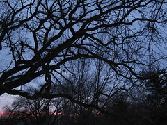 (Oak) Last Rays, Minneapolis, Minnesota, March 2008, photo © 2008 by QuoinMonkey. All rights reserved.