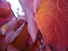 Fall color 07