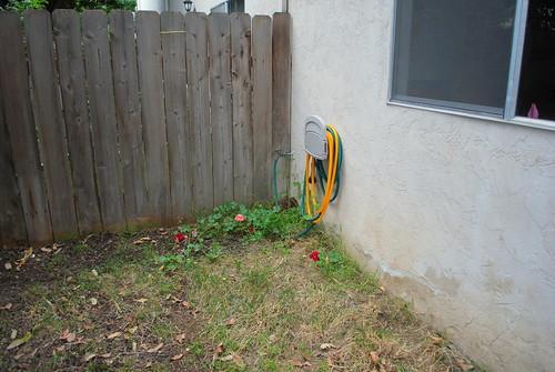 geranium & hose