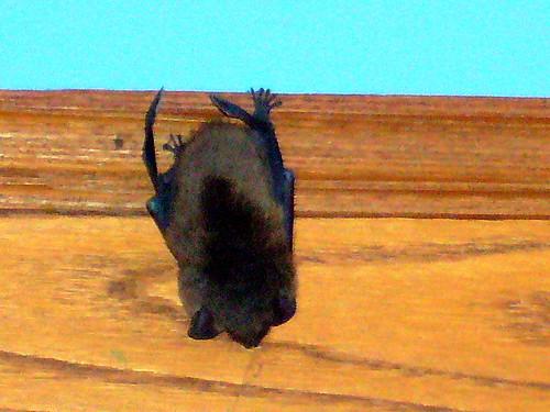 Holy crap BATman!!