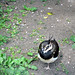 Bird missing leg