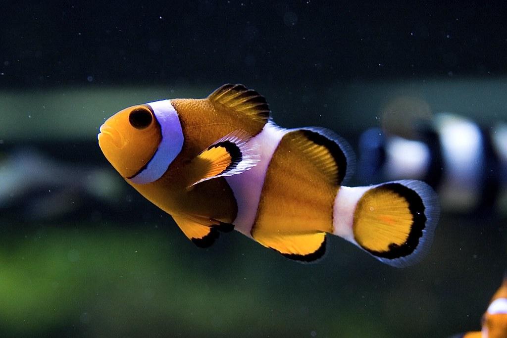 海水魚白點病圖片| - 綠蟲網 - BidWiperShare.com