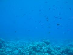manihi diving