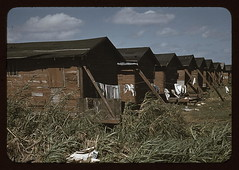 Houses which have been condemned by the Board ...