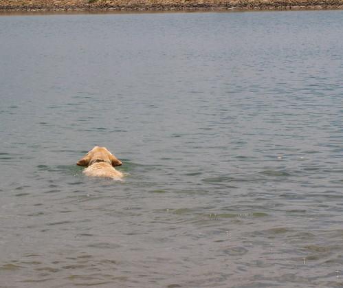 Sadie swims for treats