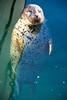 Popeye, the one-eyed seal by WorldofArun