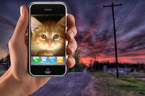 A kitten on an iPhone at (HDR) sunset