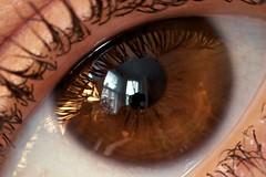 eye's eye view
