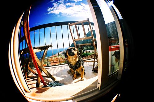 [LOMO] Mi perrita en el balcón de casa