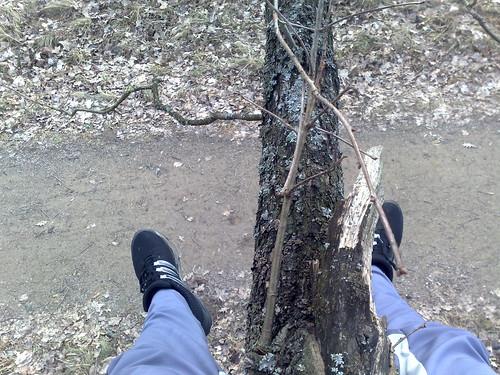 Medyje