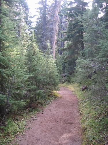 Day 04 - Godfrey Glen Trail