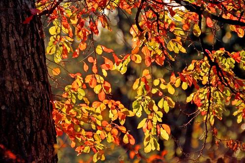 Silver Spring Fall Foliage by Smata2