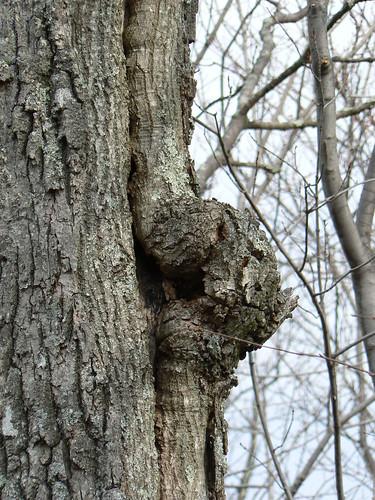 Sinking Creek Mountain - Inch Worm Tree