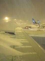 Snowy wing