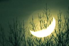 Moon, the beauty of night (1)