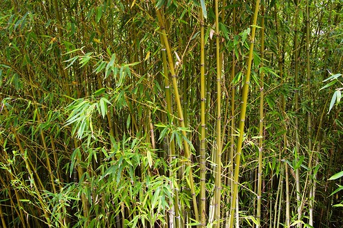 Bamboo by funadium, on Flickr