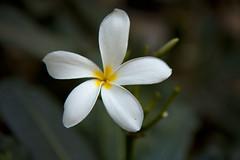Flower breathes...
