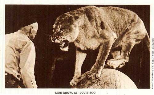 Lion Show 3.jpg