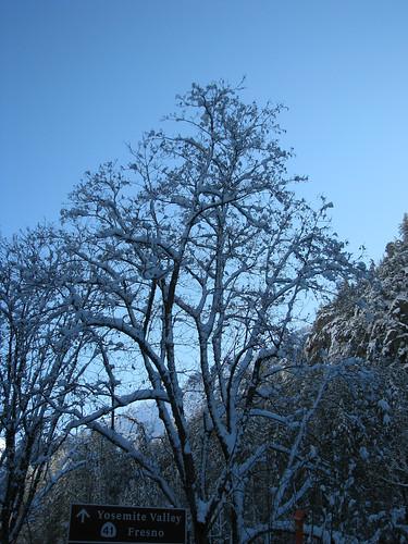 Day 03 - Snowy Tree Highway 140