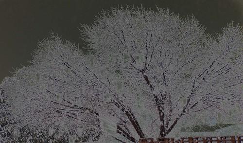 Psychedelic Winter Freaks